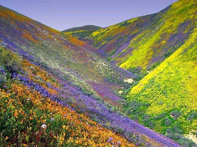 Why go to death valley bring lots of film and wide angle lenses here although its near but not in death valley is an example of wildflowers mightylinksfo